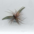 Fan Wing Mayfly