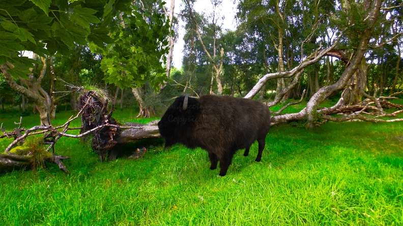 bison-catalyzer-woods-009.jpg