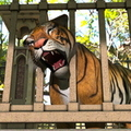 Tiger Head Stuck in Bridge