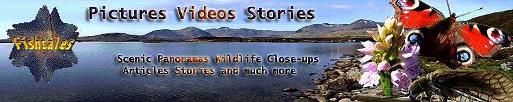 Fishtales - Pictures Videos Stories Scenic Panoramas Wildlife Close-ups Articles Stories and much more