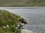 Catching Brown Trout Loch A'an Cairngorm