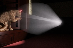 Cat in Torch Light